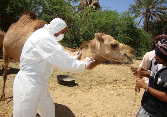 коронавирус ближневосточного респираторного синдрома